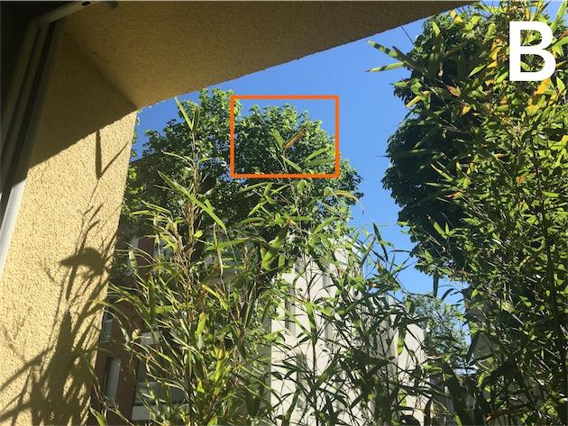 La même photo, sans zoom. À titre de comparaison, le cadre orange correspond à la photo précédente, prise au niveau de zoom maximal. — Cliquer pour agrandir