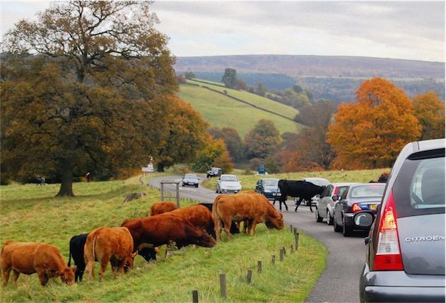 Waze a du travail à faire pour prendre en compte ce type d'embouteillages… (Photo DncnH CC BY-SA 2.0)