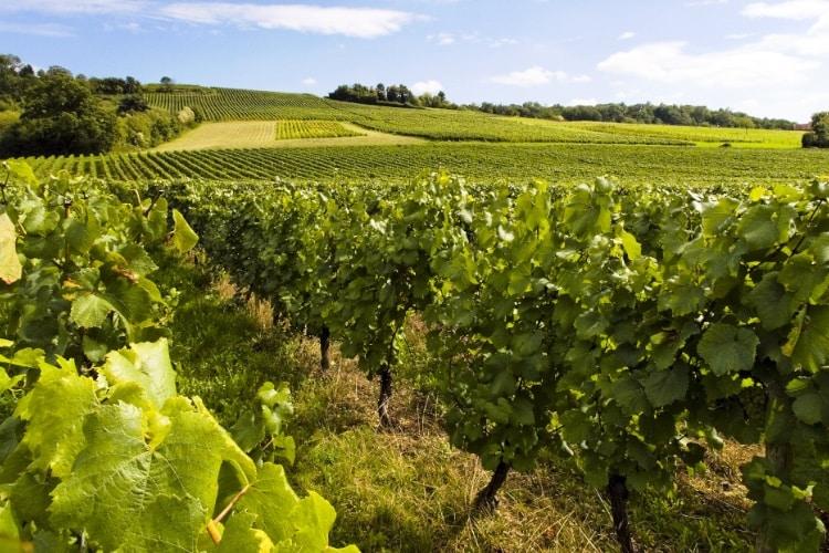 Nouveauté : la 1ère Appli dédiée aux Primeurs de Bordeaux !